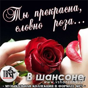 Роза шуфутинский